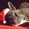 6+1 Tipp, hogy a Karácsony ne legyen rémálom!