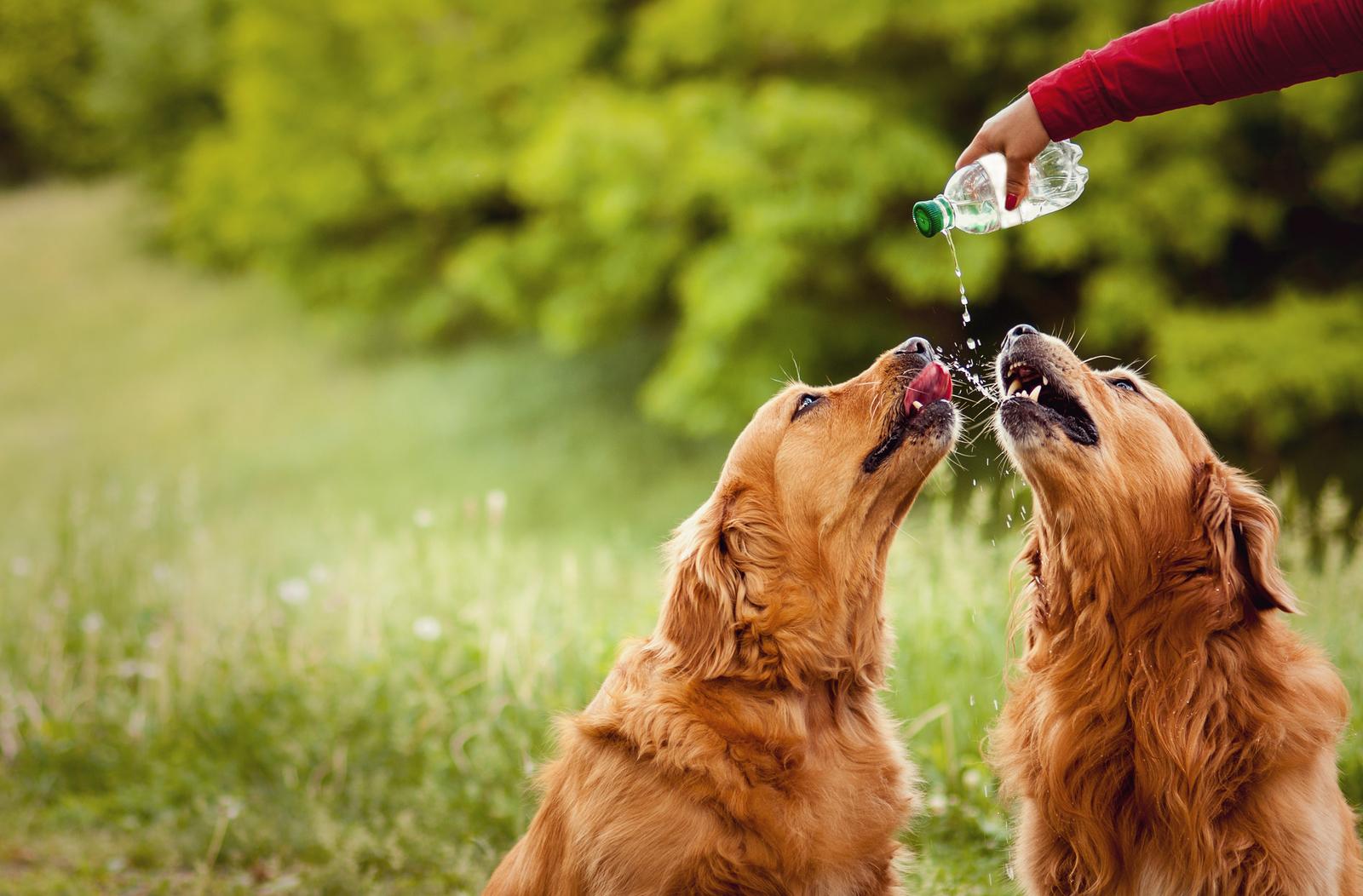 pet-drinking-bottle-5.jpg