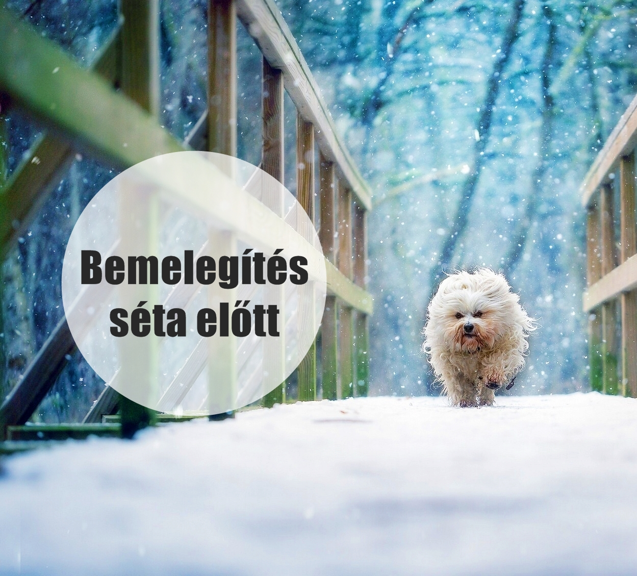 dogs-wallpapers_eu-havanese-winter-dog-bridge.jpg