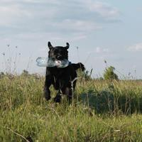 A kutyatartási kultúra vajon mi?