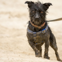 Az új kutyafajta, avagy a Marsi Juhászkutya története