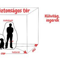 Mire tanítsd meg a kutyád?