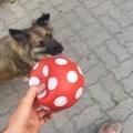 Hogyan tiltsam a kutyát? 3 tipp a szófogadó ebekért