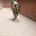 A kutya behívása 5 lépésben