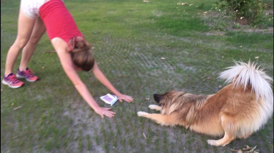 DogYoga - Jóga, tudatosság, kutyanevelés