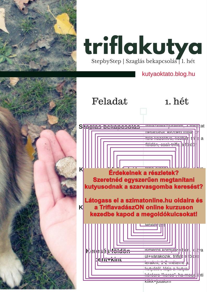 Szarvasgombász kutyát szeretnék! Triflakutya képzés egyszerűen III.