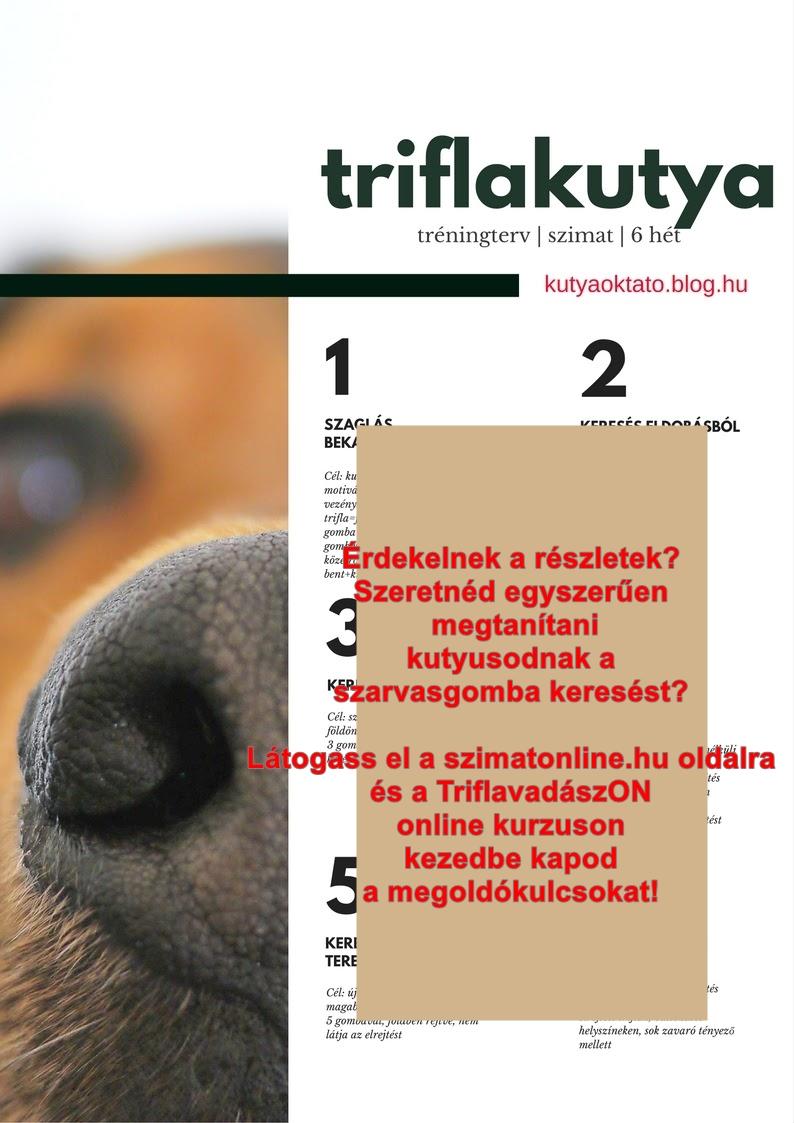 Szarvasgombász kutyát szeretnél? Triflakutya képzés egyszerűen II.