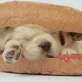 Hogyan és mivel ettesük kutyánkat?