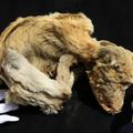 Az ezer éves kutya múmia