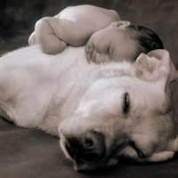 Kutya tartás gyerek mellett
