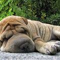 A hét kutya képe