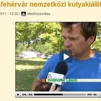 Székesfehérvári nemzetközi kutyakiállítás