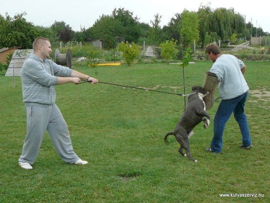 kutyaszerviz kutyakiképzés