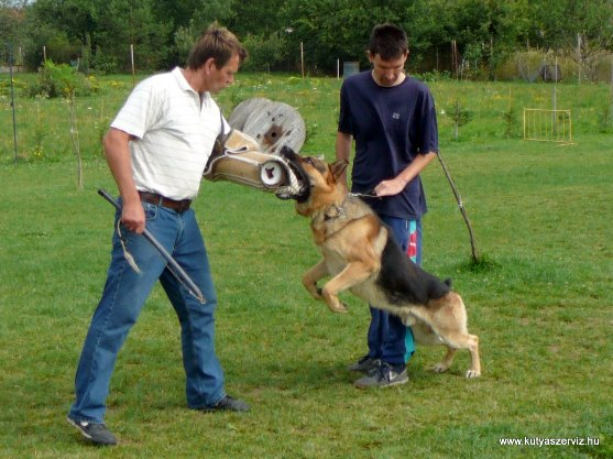 kutyaszerviz kutyakiképzés knitlhoffer