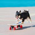 Mi a mai kutyakütyü trend?