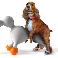 Tüzelőállás kutyák számára