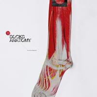 Anatómia zokni