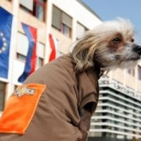 Külföldre utazás labradorral