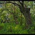 Zölderdőben jártam