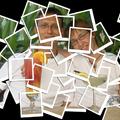 Néhány polaroid