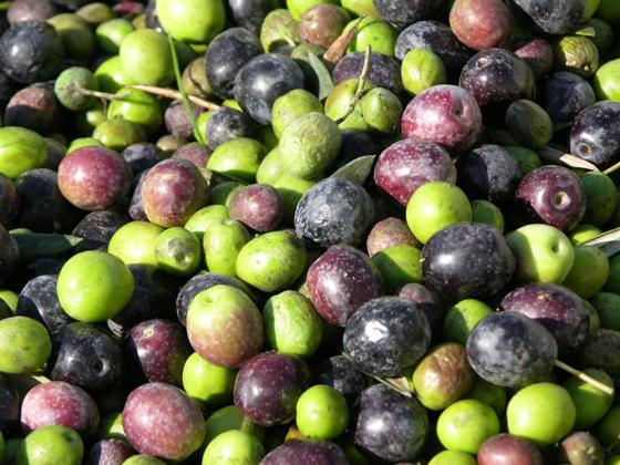 fresh-olives.jpg