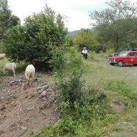 A jó pásztor .. #ladatour #zsiguli #zhiguli #vaz2101 #2101 #albania #alpbes