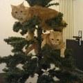 Tippek karácsonyra: háziállatok