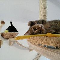Macskabirodalom
