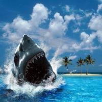 A nő bosszúja, avagy vigyázz, fehér cápa