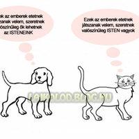 Kutyák VS Macskák