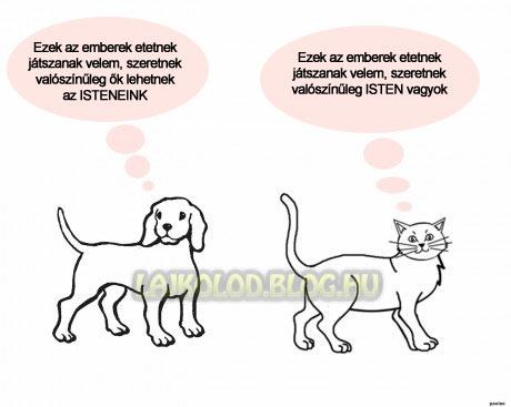 Kutyák VS Macskák - Lájk
