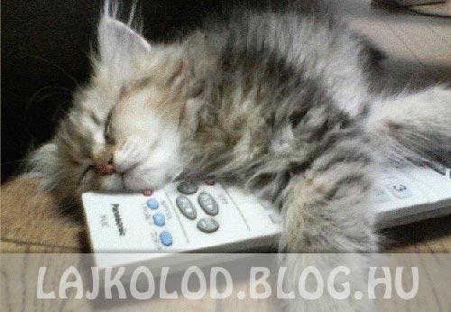 Macska TV lájk