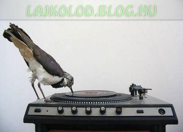 Lájk - Madár DJ