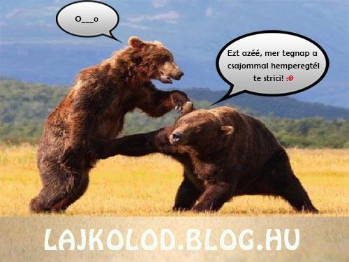 Medve csata párbeszéddel - Lájk