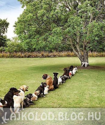 Kutya WC - Lájk