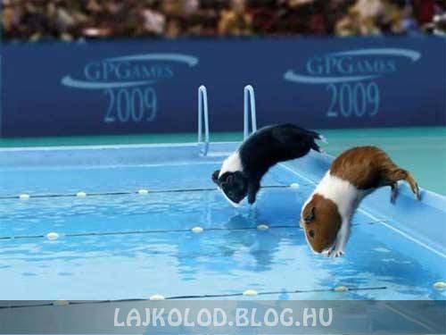 Tengerimalac úszás - Lájk