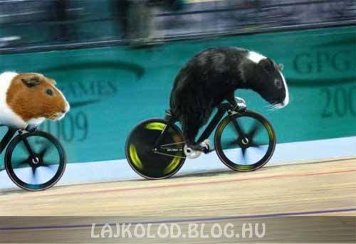 Tengerimalac biciklin - Lájk