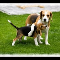 Szülinapi ajándék egy kutyusnak