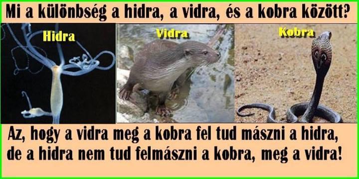 vidra_1.jpg