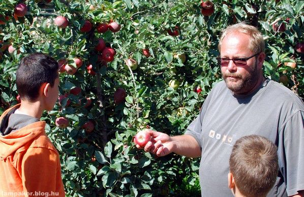Apple picking for autistic persons in Szabolcs County