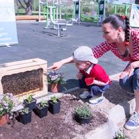 Állítsd meg a méhpusztulást, ültess nekik növényeket
