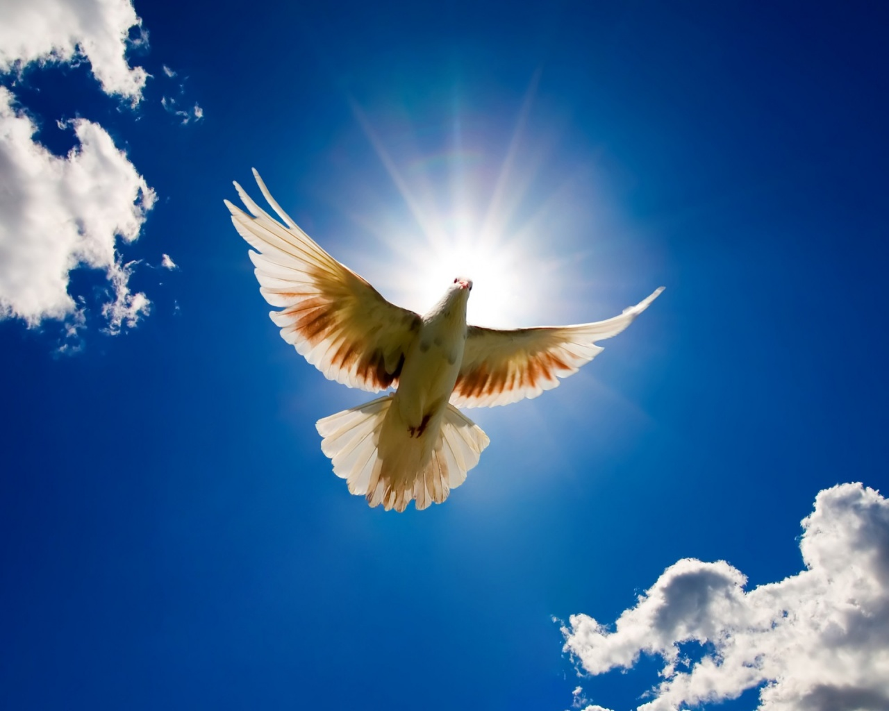 world-peace-dove-wallpaper-2.jpg