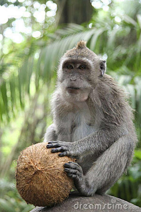 monkey_business.jpg