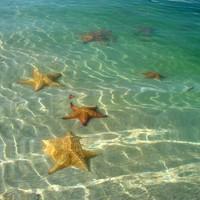 A tengeri csillagok megmentője - The Star Thrower