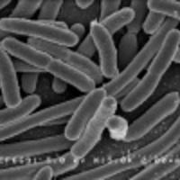 No II. szuperbaci: ESBL termelő baktérium