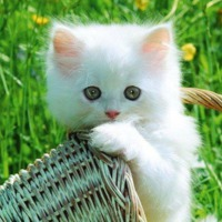 Egy kis macskatörténelem