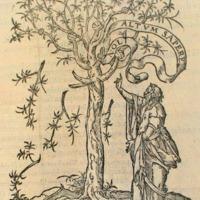 A fa, a könyv és Erasmus