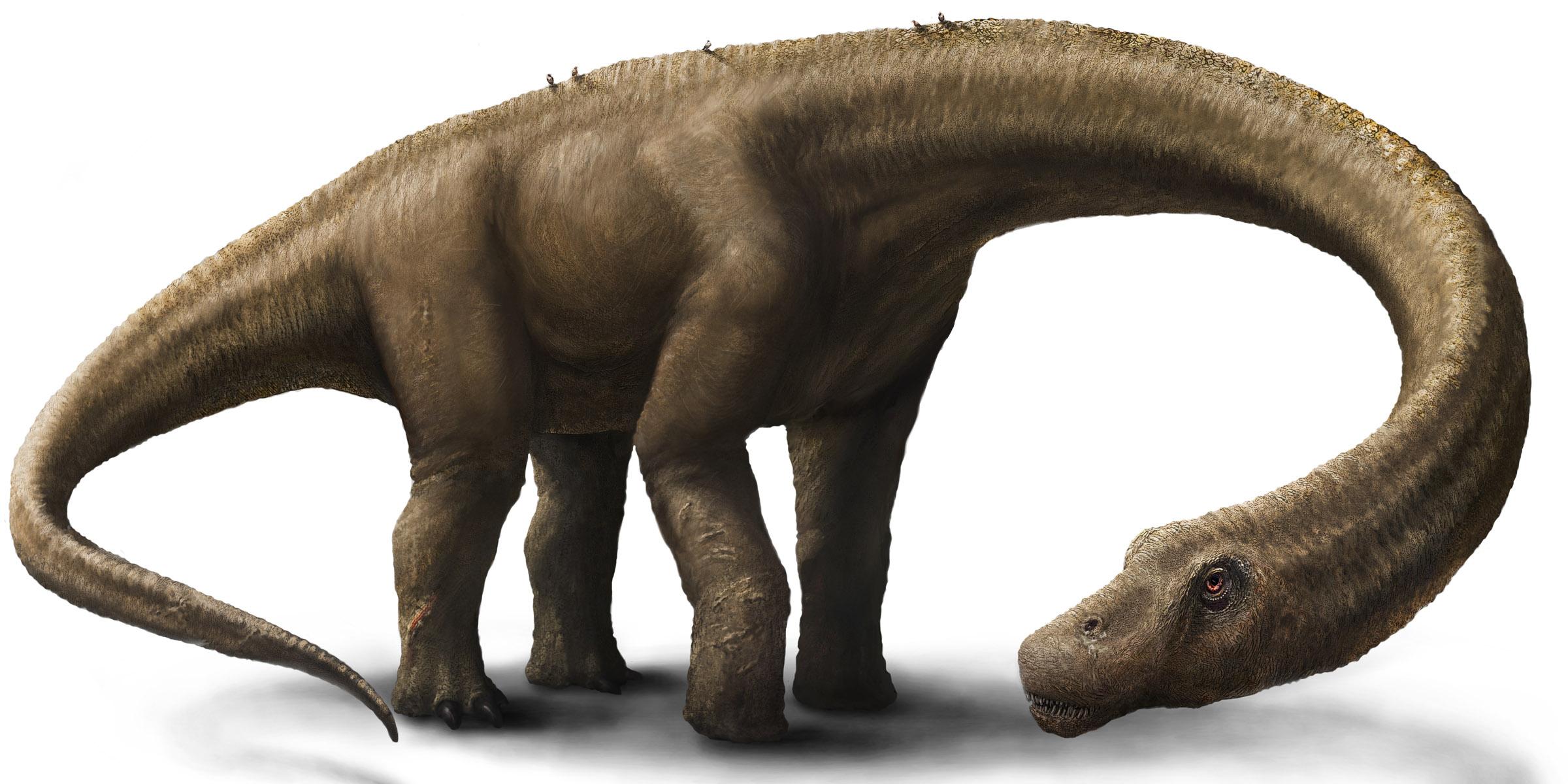 20140904dinoszaurusz-felfedezes-argentina-dreadnoughtus-schrani4.jpg