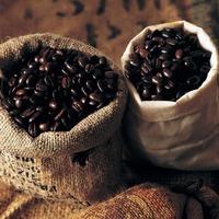 A világ 5 legdrágább kávéja