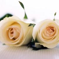 Rózsák 2.